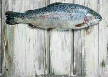 Raw fish salmon stock photo