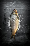 Raw fish with salt. Royalty Free Stock Photos