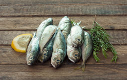 Raw fish (scad) Stock Images