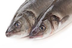 Raw fish sea bass Stock Image