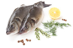 Raw fish sea bass with lemon and parsley. Isolated on white background Royalty Free Stock Photos