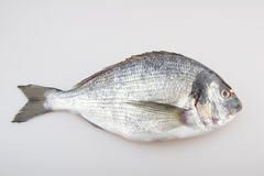Raw fish sea bream. On white background Stock Photography