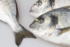 Raw fish sea bream. On white background Stock Photo