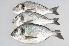 Raw fish sea bream. On white background Stock Image