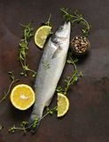 Raw fish seabass. With lemon and herbs Royalty Free Stock Photos