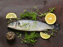 Raw fish seabass. With lemon and herbs Royalty Free Stock Photography