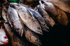 Raw fish sliced and cut at street market Royalty Free Stock Photography