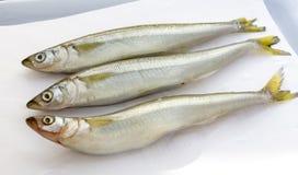 Raw fish smelt Royalty Free Stock Image