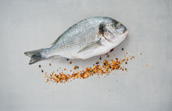 Raw fish and spices. Raw gilthead (sea bream) with chilli and pepper spice on gray background Stock Photo