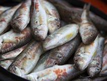 Raw fish, surmullet - Crimean delicacy Stock Photos