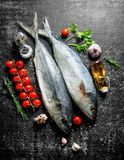 Raw fish with tomatoes on branch, greens and oil. On dark rustic background stock photos