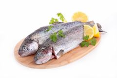 Raw fish,trout Royalty Free Stock Images