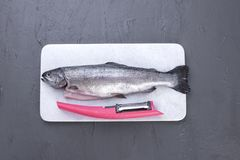 Raw fish. Trout on a white stone board. Gray background. Free space for text. Copy space. Raw fish. Trout on a white stone board. Gray background. Free space Royalty Free Stock Photo