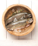 Raw fish trout Royalty Free Stock Photos