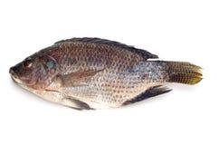 Raw fish on white royalty free stock image