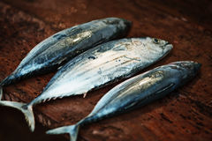 Raw fish on a wooden counter of the open market - mackerel Royalty Free Stock Photography