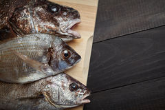 Raw fish on wooden cutting board. Sciaena umbra, diplodus annularis on wooden cutting board at the kitchen Royalty Free Stock Images