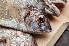 Raw fish on wooden cutting board. Sciaena umbra, diplodus annularis on wooden cutting board at the kitchen Stock Photos