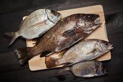 Raw fish on wooden cutting board. Sciaena umbra, diplodus annularis on wooden cutting board at the kitchen Stock Photo