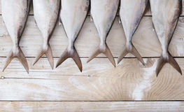 Raw fish, Yellowtail, in a row Royalty Free Stock Photo