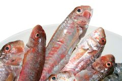 Raw fishes royalty free stock images