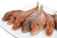 Raw fishes. Closeup of a plate with raw fishes on a white background Stock Photography