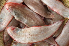 Raw fishes. On a white background Stock Image