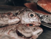 Raw Fishes with big eyes stock image