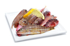 Raw fishes. Closeup of a plate with raw fishes on a white background Stock Image