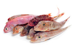 Raw fishes. Closeup of some raw fishes on a white background Royalty Free Stock Photography