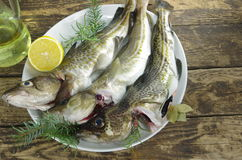 Raw fishes Stock Photography