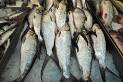Free Raw Fishes Selling In The Wet Market Stock Photos - 13841783