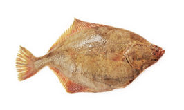 Raw flatfish. Raw flatfish on the white Royalty Free Stock Image
