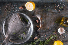 Raw flounders with different seasoning on the stone background horizontal Stock Photography
