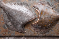 Raw flounders on the stone background top view Royalty Free Stock Images
