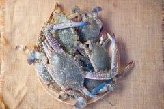 Raw flower crab Portunus pelagicus premium grade. Close-up photo of fresh raw flower crab Portunus pelagicus premium grade Stock Photography