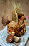 Raw Forest Mushrooms Royalty Free Stock Photo
