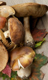 Raw Forest Mushrooms Royalty Free Stock Image