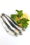 Raw fresh anchovies. Raw anchovies with lemon and parsley Stock Photos