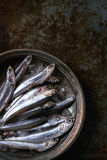 Raw fresh anchovies fishes Royalty Free Stock Image