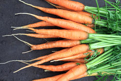 Raw fresh carrots with tails on natural background Royalty Free Stock Image