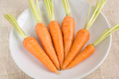 Raw fresh carrots on white plate Stock Photography