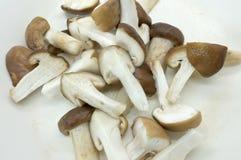 Raw fresh chopped mushroom. On white background Stock Photography