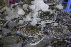 Raw Fresh Crabs  on ice Royalty Free Stock Photo