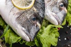 Raw fresh fish dorado Stock Image