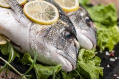 Raw fresh fish dorado Royalty Free Stock Image
