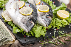 Raw fresh fish dorado Royalty Free Stock Photos