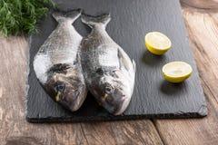 Raw fresh fish dorado Stock Images
