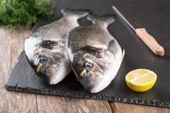 Raw fresh fish dorado Royalty Free Stock Photo