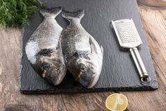 Raw fresh fish dorado Royalty Free Stock Photography
